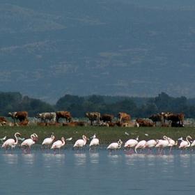 Фламингите 4