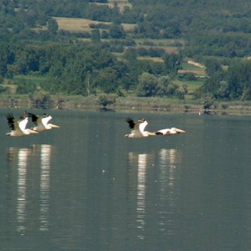 Пеликаните 2