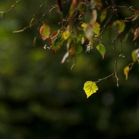 Есенно :)