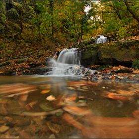 Песента на есенната гора
