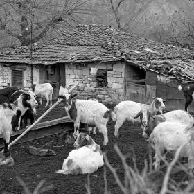 село Лисиците, близо до цивилизацията, но откъснато от нея