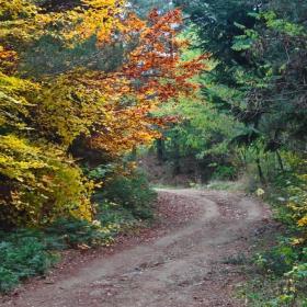 Вятърко листи в гората пилей, Косето-Босето сладко не пей-с пойните птички отлитна на юг. Есен е вече пристигнала тук.