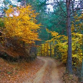 Весело есенна, в чудна премяна песен начева гората засмяна. Сръчни дръвчета бродират килими с пъстри листенца – за нощите зимни.