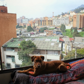 Oouka & Bogota