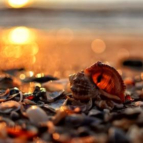Морско съкровище