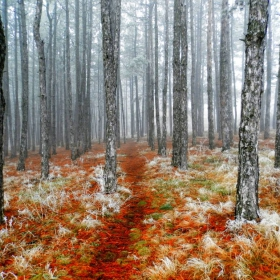 Късна есен.