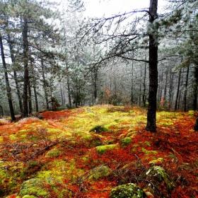 Есен в гората2