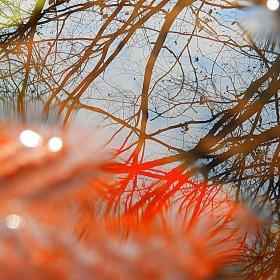 Смел експеримент-Отражения в горска локва