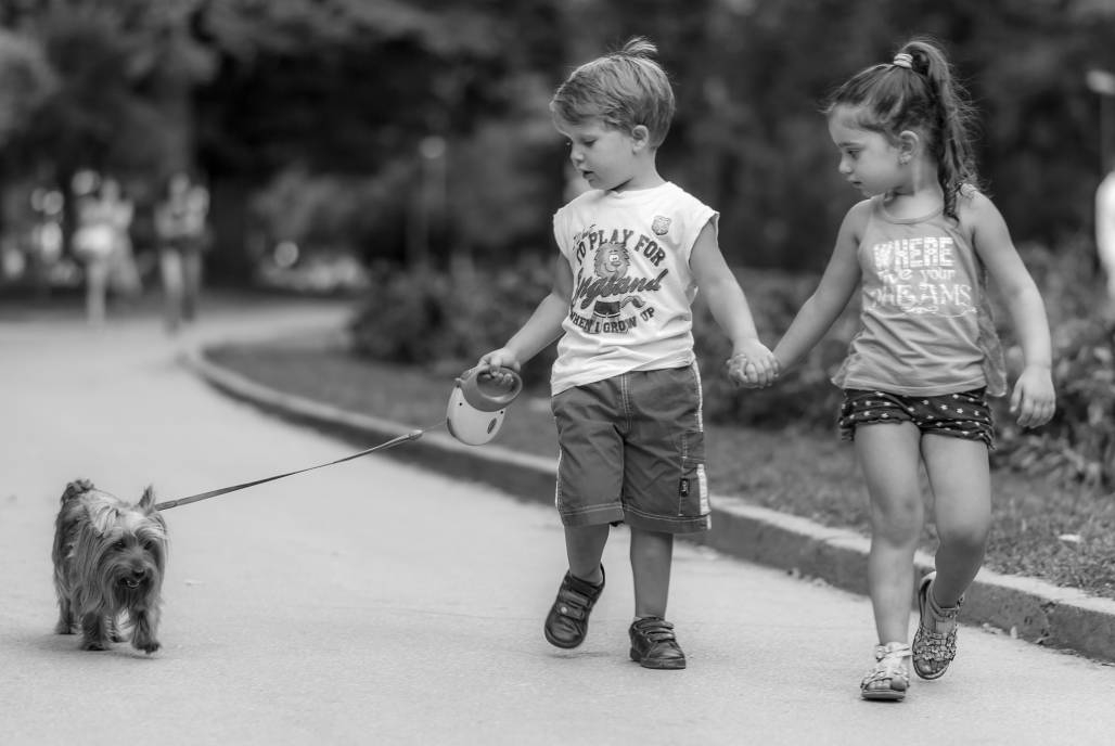Приятели на разходка