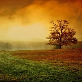 Цветове в мъглата