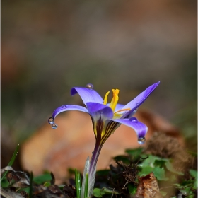 за пролетно настроение