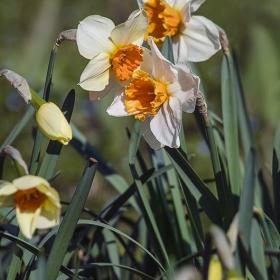 Пролетно шушукане