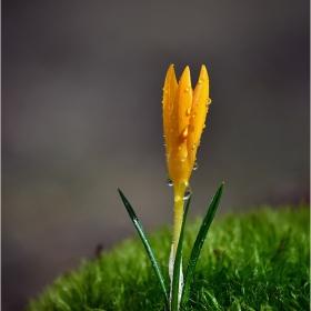жълтозелена пролет