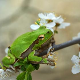 Честита пролет!