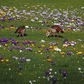 Пролет, та пролет...