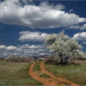 Джанкова пролет в западно западналите покрайнини...
