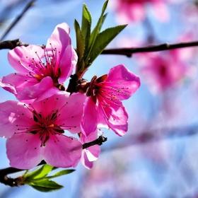 Нежна пролет