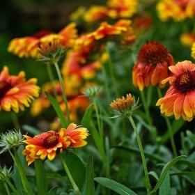 ..: цветни багри...