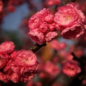 Цветница е, честит празник на всички с имена на цветя!!