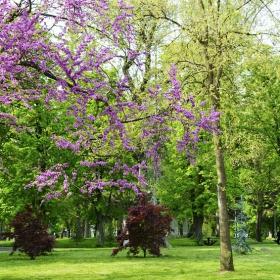 Градската градина в Ямбол