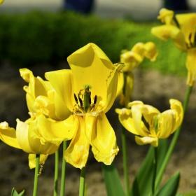 Пролетно :)