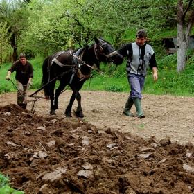 Земеделие в BG - 1 - 2010