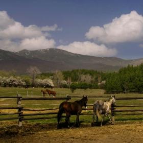 Животът в ранчото!