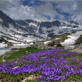 Килим от Мразовци постила пролетта на Рила...