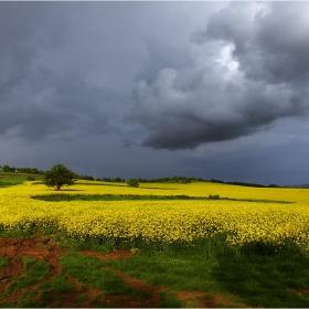 Смръщен облак над полето рапично