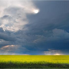 И навред полето се жълтее, облаци тъмнеят
