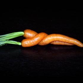 Гушнати морковчета