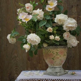 Розов нюанс