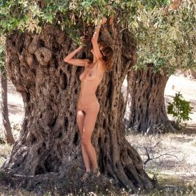 най-старата маслинова градина по Тракийското крайбрежие