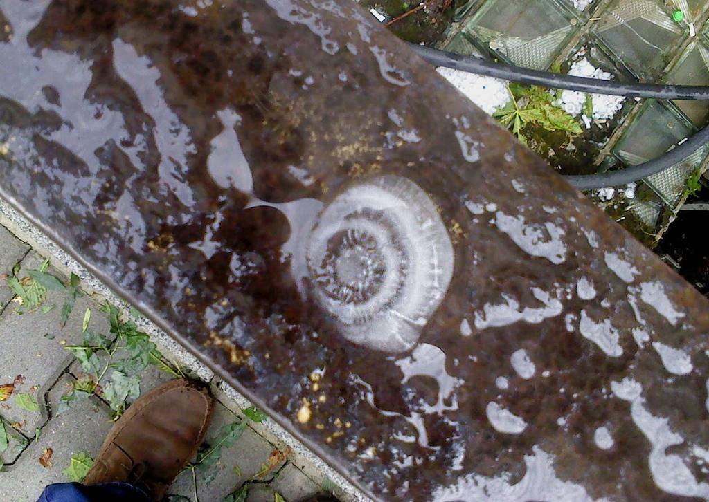 Над София валяха медузи