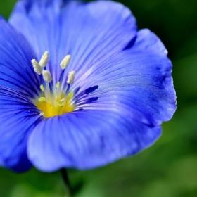 Лятно синьо