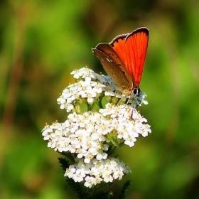 Пеперуден свят