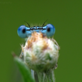 Виждам те  !  : )