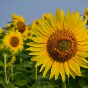 за слънчево настроение