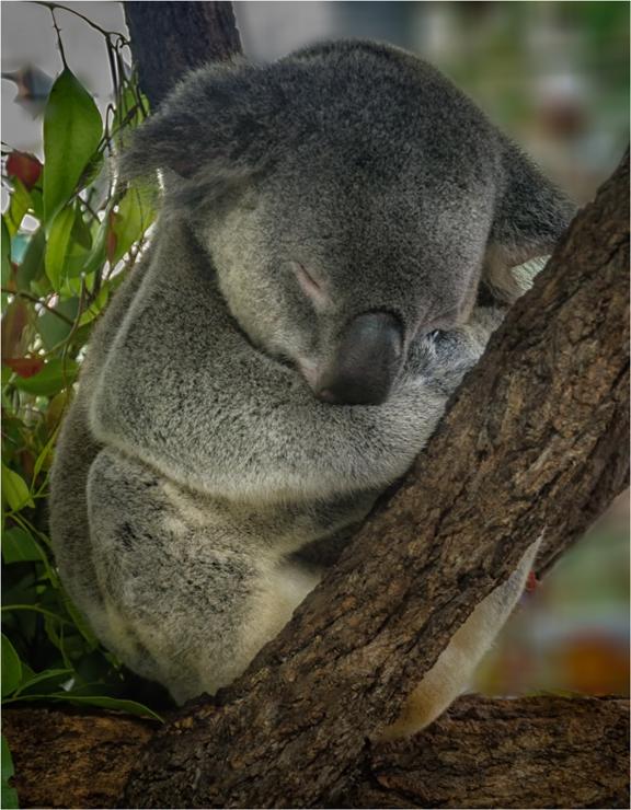 Koala - един образцов служител от държавната администрация :)