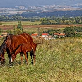 Пейзаж с кончета