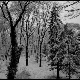 Зимен лес