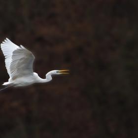 Полетът на голямата бяла птица
