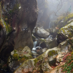 днес в мистичната гора