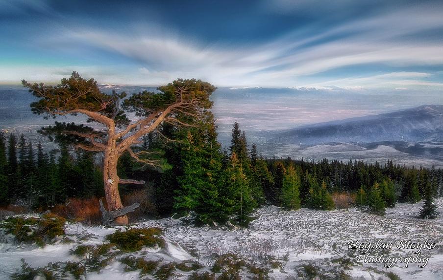 Рошаво дърво ...