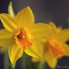 Жажда за пролет