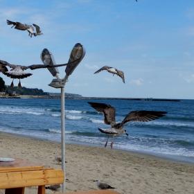 Нашествие на гладни чайки