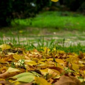 есенно2