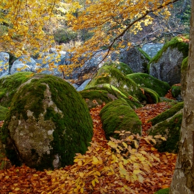 Витошка есен