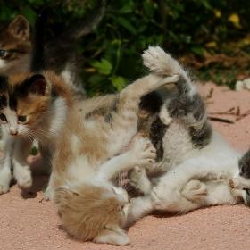 Играта на малките котета