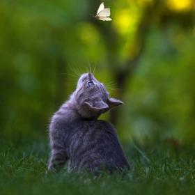Ловецът на пеперуди